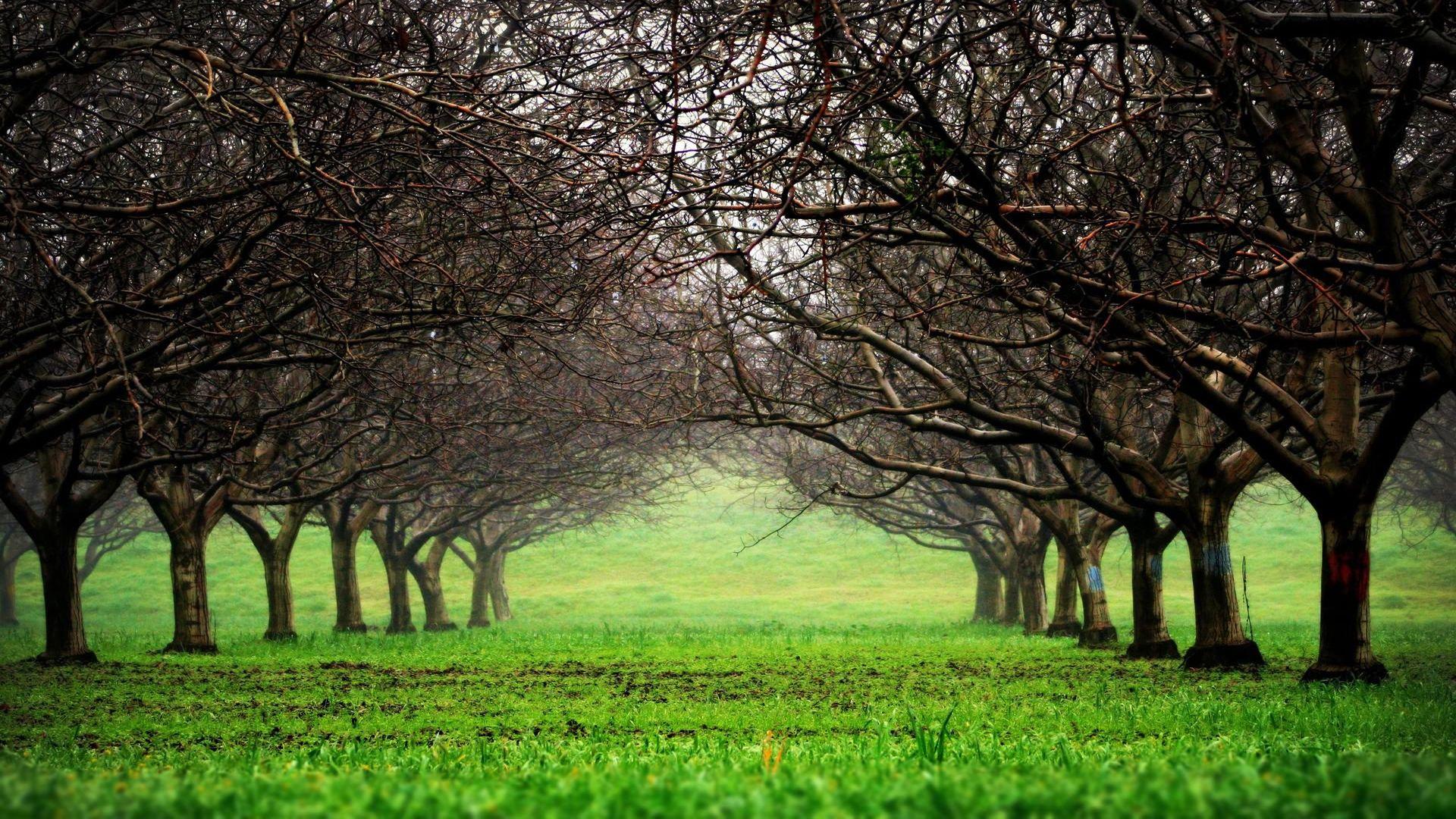 Деревья парк трава онлайн