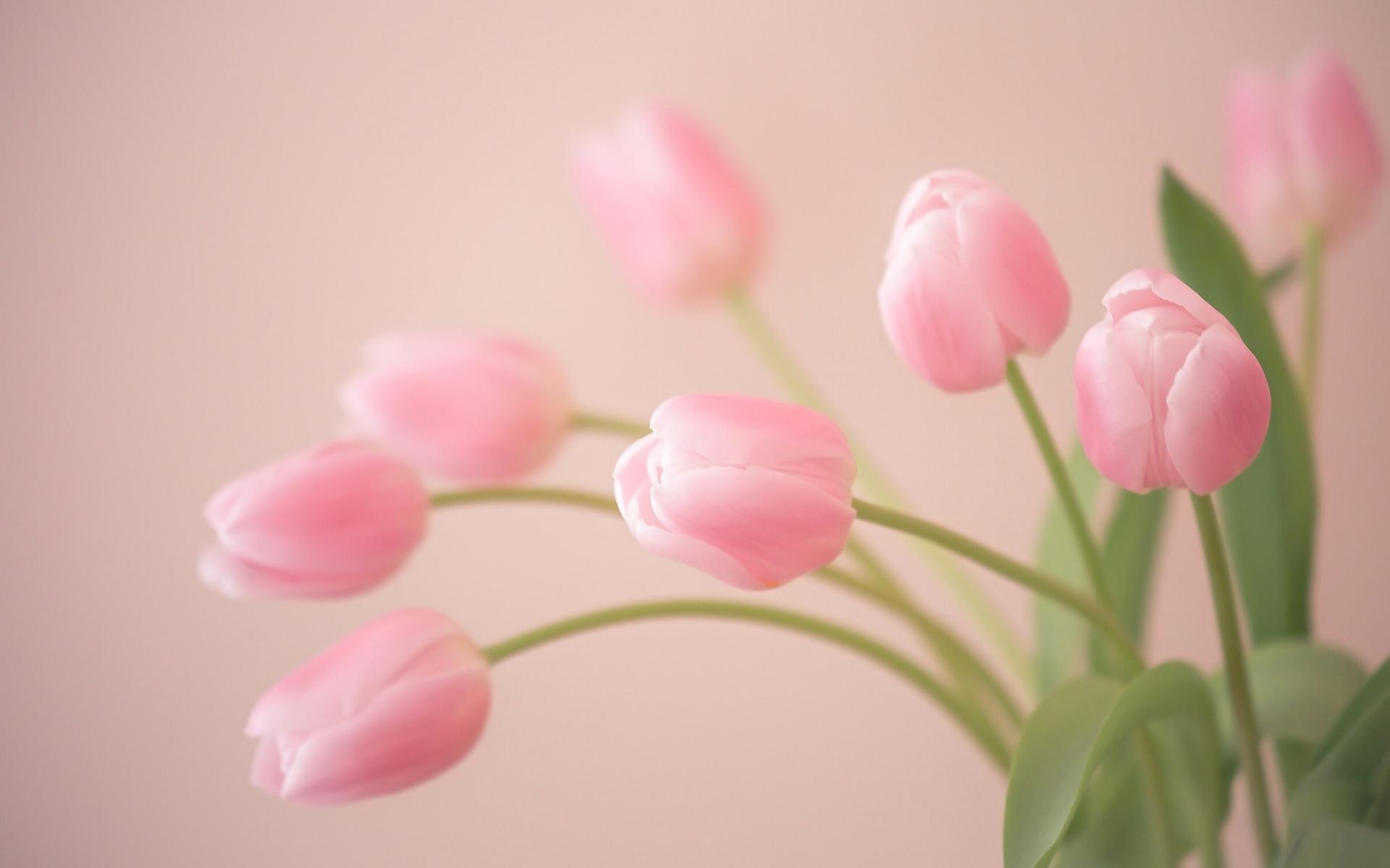 Тему открытка, открытка с розовыми тюльпанами