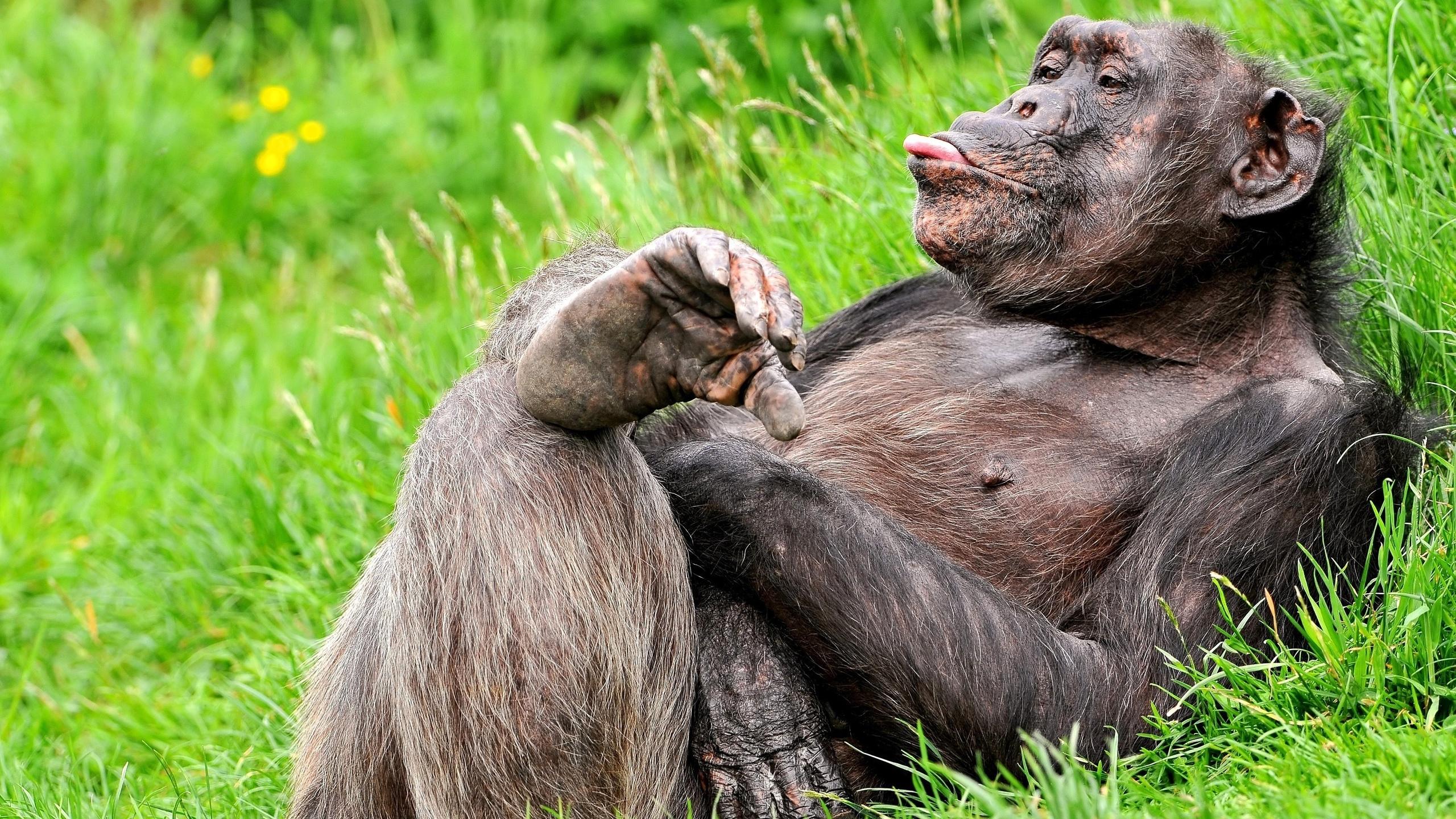 Смешные, прикольные картинки на стол про животных